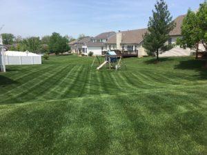 Treated Yard